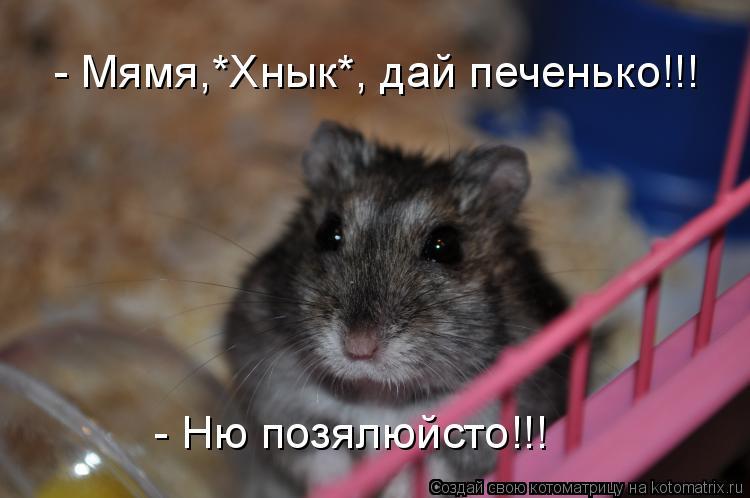 Котоматрица: - Мямя,*Хнык*, дай печенько!!! - Ню позялюйсто!!!