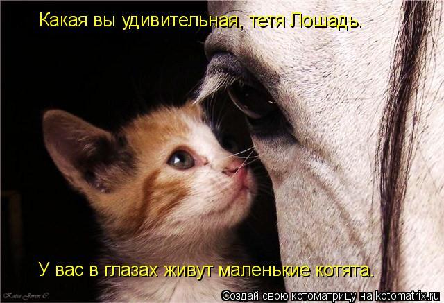 Котоматрица: Какая вы удивительная, тетя Лошадь. У вас в глазах живут маленькие котята.