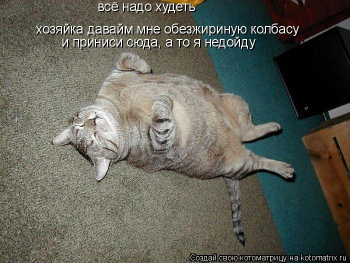 Котоматрица: всё надо худеть хозяйка давайм мне обезжириную колбасу и приниси сюда, а то я недойду