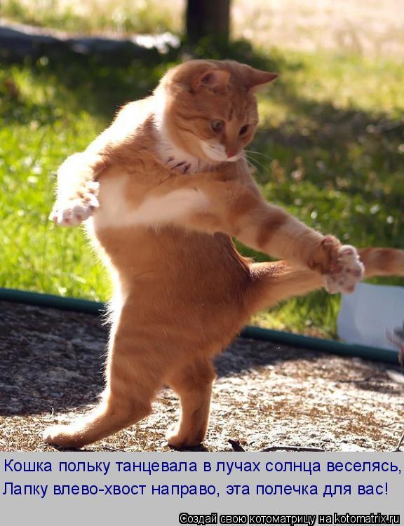 Котоматрица: Кошка польку танцевала в лучах солнца веселясь, Лапку влево-хвост направо, эта полечка для вас!