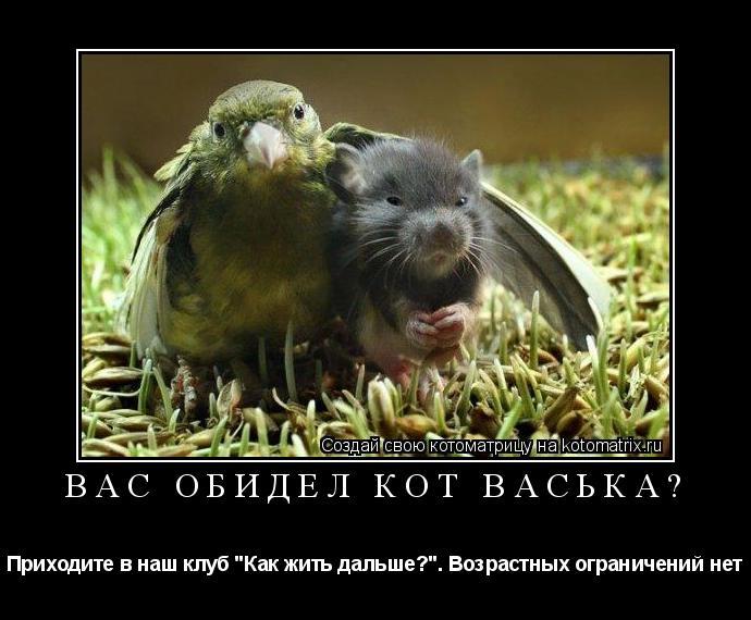 """Котоматрица: Вас обидел кот Васька? Приходите в наш клуб """"Как жить дальше?"""". Возрастных ограничений нет"""