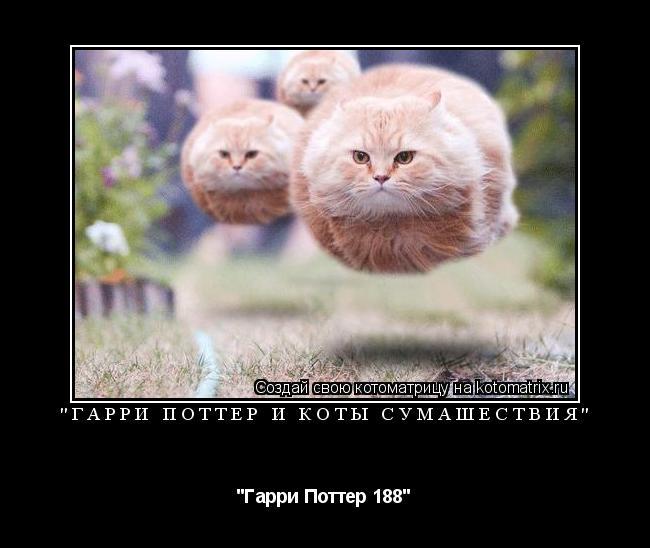 "Котоматрица: ""Гарри Поттер и Коты Сумашествия"" ""Гарри Поттер 188"""