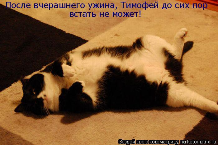 Котоматрица: После вчерашнего ужина, Тимофей до сих пор  встать не может!
