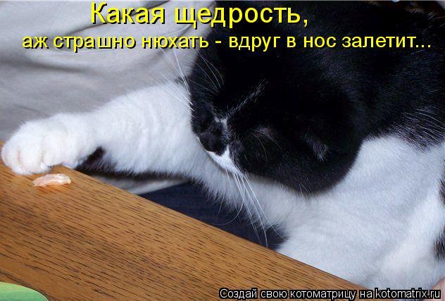 Котоматрица: Какая щедрость,  аж страшно нюхать - вдруг в нос залетит...