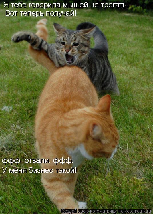 Котоматрица: Я тебе говорила мышей не трогать!  Вот теперь получай! ффф. отвали. ффф. У меня бизнес такой!