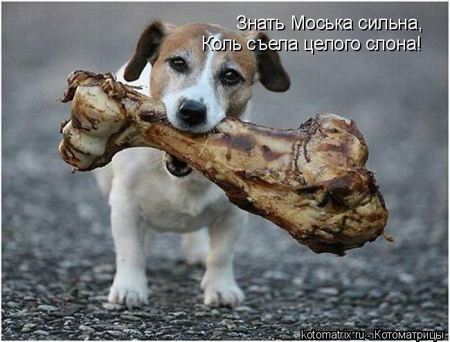 Котоматрица: Знать Моська сильна, Коль съела целого слона!