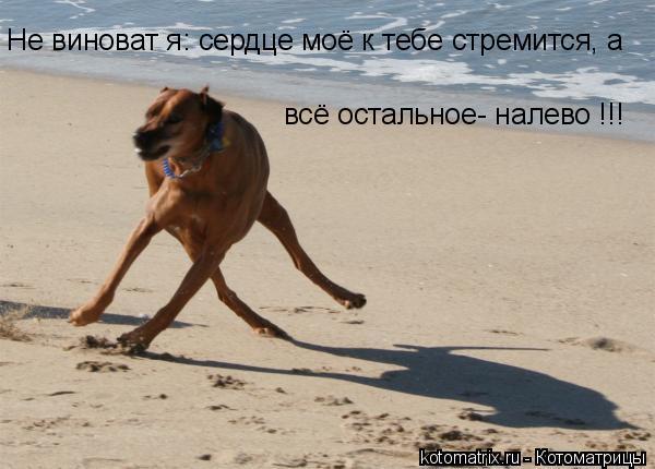 Котоматрица: Не виноват я: сердце моё к тебе стремится, а всё остальное- налево !!!