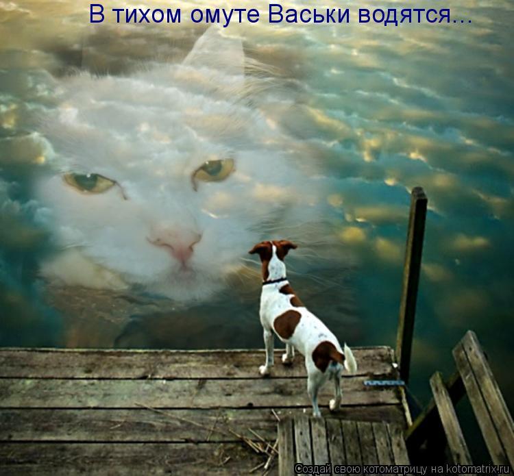 Котоматрица: В тихом омуте Васьки водятся...