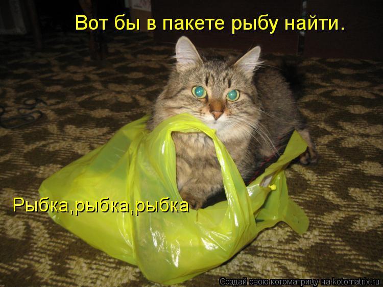 Котоматрица: Вот бы в пакете рыбу найти.  Рыбка,рыбка,рыбка