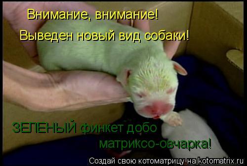 Котоматрица: Внимание, внимание! Выведен новый вид собаки! ЗЕЛЕНЫЙ финкет добо  матриксо-овчарка!
