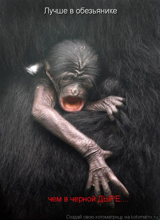 Котоматрица: Лучше в обезьянике чем в черной ДЫРЕ....