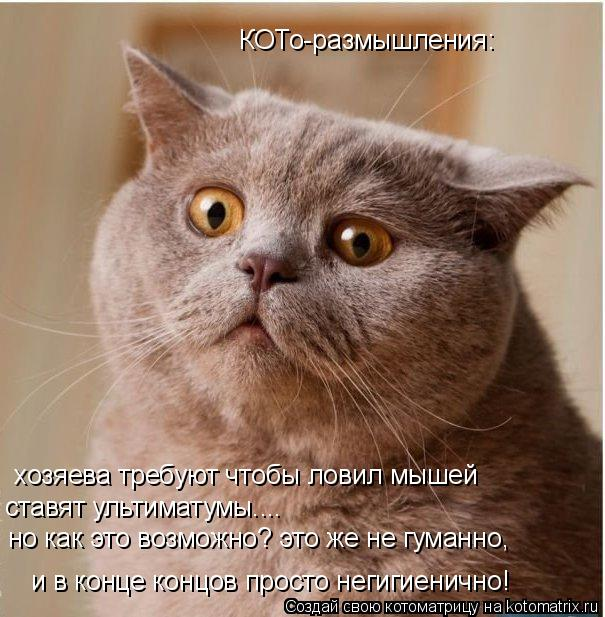 Котоматрица: хозяева требуют чтобы ловил мышей ставят ультиматумы.... но как это возможно? это же не гуманно, и в конце концов просто негигиенично! КОТо-ра