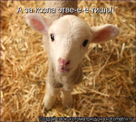 Котоматрица: А за козла отве-е-е-тишь!!