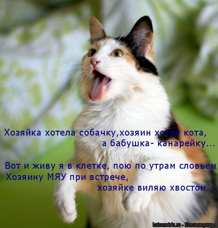 Котоматрица: Вот и живу я в клетке, пою по утрам словьем Хозяйка хотела собачку,хозяин хотел кота, а бабушка- канарейку... Хозяину МЯУ при встрече,  хозяйке