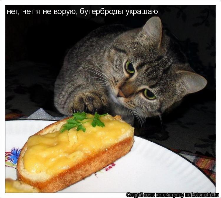 Котоматрица: нет, нет я не ворую, бутерброды украшаю