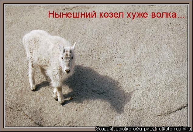 Котоматрица: Нынешний козел хуже волка...