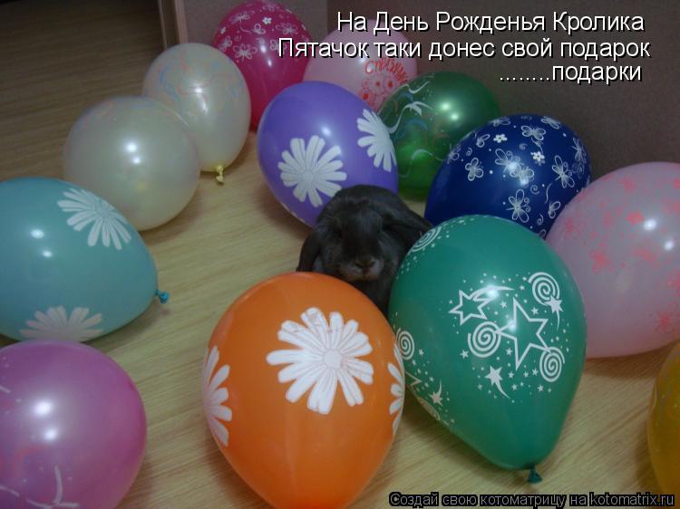 Котоматрица: На День Рожденья Кролика  Пятачок таки донес свой подарок ........подарки