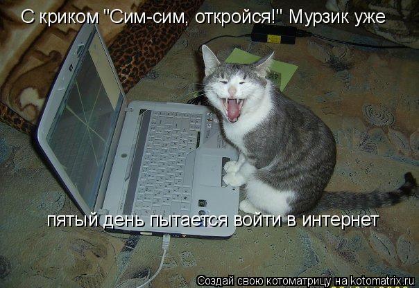 """Котоматрица: С криком """"Сим-сим, откройся!"""" Мурзик уже пятый день пытается войти в интернет"""