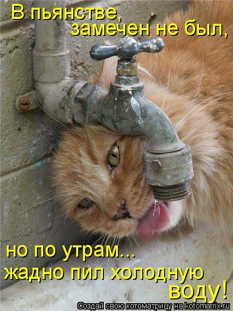 Котоматрица: В пьянстве, замечен не был, но по утрам... жадно пил холодную воду!