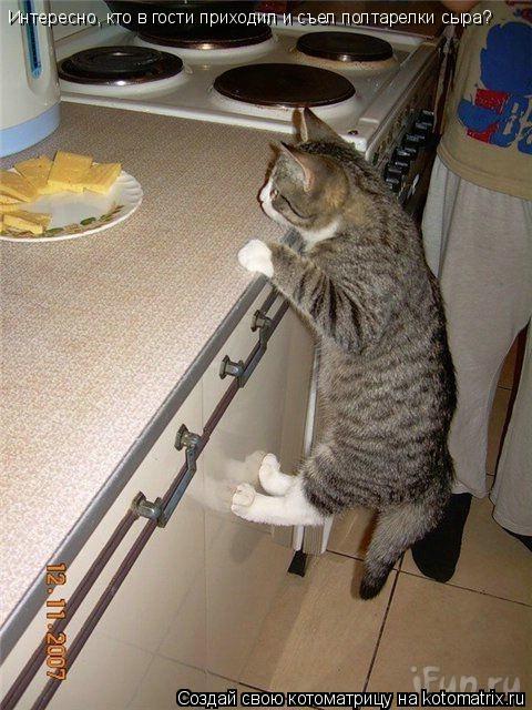 Котоматрица: Интересно, кто в гости приходил и съел полтарелки сыра?