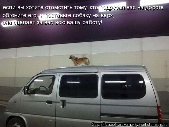 Котоматрица: если вы хотите отомстить тому, кто подрезал вас на дороге обгоните его, и поставьте собаку на верх, она сделает за вас всю вашу работу!