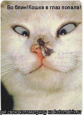 Котоматрица: Во блин!Кошка в глаз попала!