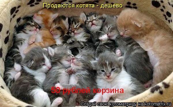 Котоматрица: Продаются котята - дешево 50 рублей корзина