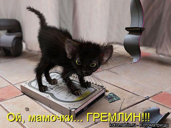 Котоматрица: Ой, мамочки... ГРЕМЛИН!!!