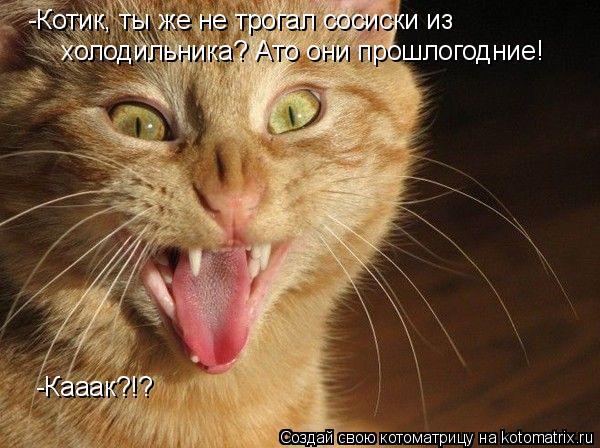 Котоматрица: -Котик, ты же не трогал сосиски из  холодильника? Ато они прошлогодние! -Кааак?!?