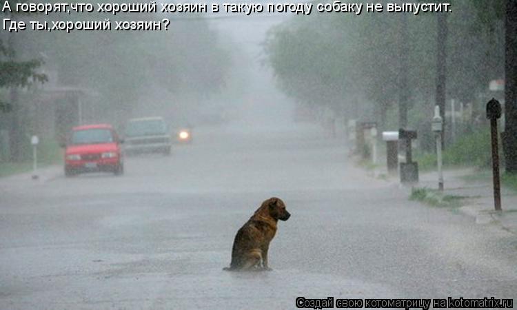 Котоматрица: А говорят,что хороший хозяин в такую погоду собаку не выпустит. Где ты,хороший хозяин?