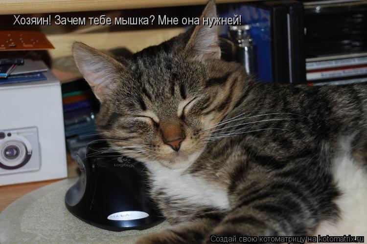 Котоматрица: Хозяин! Зачем тебе мышка? Мне она нужней!