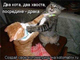 Котоматрица: Два кота, два хвоста, посредине - драка