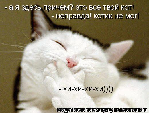 Котоматрица: - а я здесь причём? это всё твой кот! - неправда! котик не мог!  - хи-хи-хи-хи))))