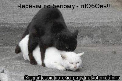 Котоматрица: Черным по белому - лЮбОвь!!!
