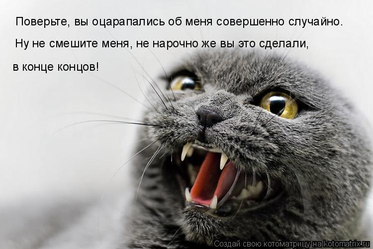 Котоматрица: Поверьте, вы оцарапались об меня совершенно случайно. Ну не смешите меня, не нарочно же вы это сделали,  в конце концов!