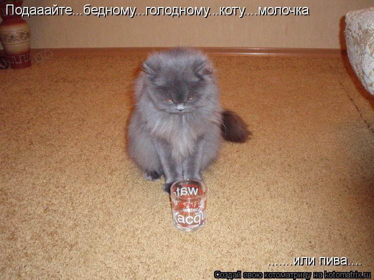 Котоматрица: Подааайте...бедному...голодному...коту....молочка .......или пива....
