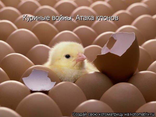 Котоматрица: Куриные войны: Атака клонов