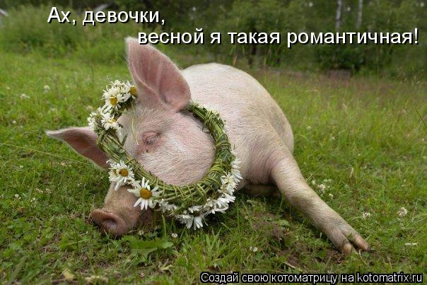 Котоматрица: Ах, девочки, весной я такая романтичная!
