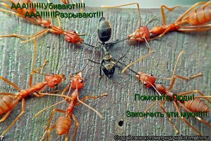 Котоматрица: ААА!!!!!!!Убивают!!!! ААА!!!!!!Разрывают!!! Помогите Люди! Закончить эти муки!!!!