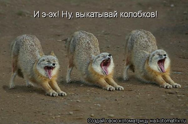 Котоматрица: И э-эх! Ну, выкатывай колобков!