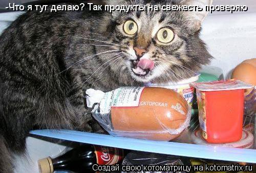 Котоматрица: -Что я тут делаю? Так продукты на свежесть проверяю