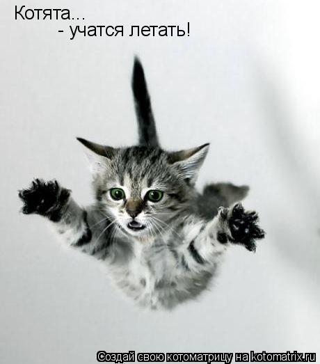 Котоматрица: Котята... - учатся летать!