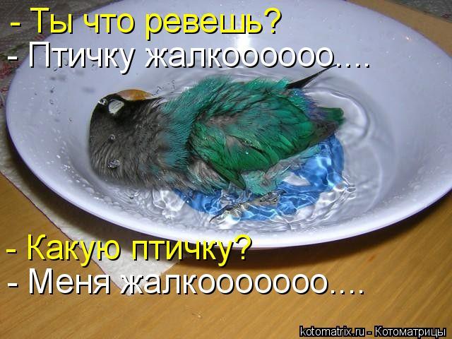 Котоматрица: - Ты что ревешь? - Птичку жалкоооооо………. - Меня жалкооооооо…….. - Какую птичку?