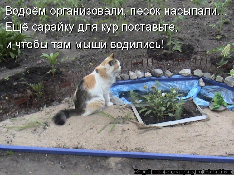 Котоматрица: Водоём организовали, песок насыпали... Ещё сарайку для кур поставьте,  и чтобы там мыши водились!