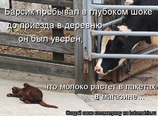 Котоматрица: Барсик пребывал в глубоком шоке до приезда в деревню он был уверен, что молоко растет в пакетах в магазине...
