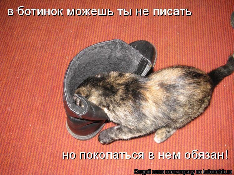 Котоматрица: в ботинок можешь ты не писать но покопаться в нем обязан!