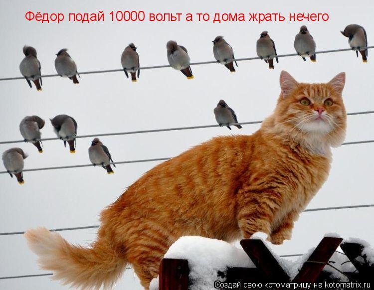 Котоматрица: Фёдор подай 10000 вольт а то дома жрать нечего