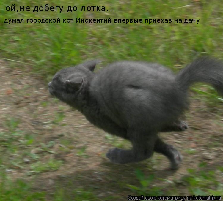 Котоматрица: ой,не добегу до лотка... думал городской кот Инокентий впервые приехав на дачу