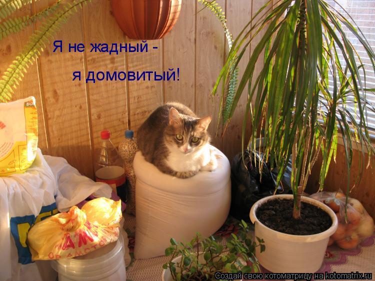 Котоматрица: Я не жадный - я домовитый!