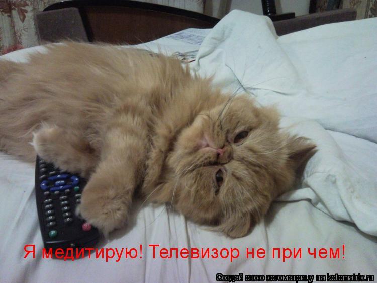 Котоматрица: Я медитирую! Телевизор не при чем!